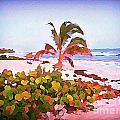 Cayman Island Secret by John Malone