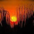 Cayo Grande Palm Tree Sunrise by Mark Olshefski
