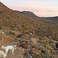 Ceaser, Mocha, And Chico In The Cerbat Mountains by James Welch