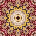 Cecropia Sun 5 by Lisa Lipsett