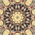 Cecropia Sun 3 by Lisa Lipsett