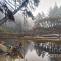 Cedar Creek Lagoon by Don Hall