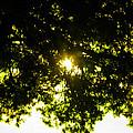Cedar Filtered Sun by Nick Kirby
