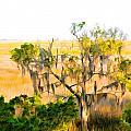 Cedar In The Marsh by Ginger Wakem