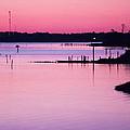 Cedar Island Pinks by Paula OMalley
