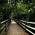 Cedar Pathway 2.0 by Michelle Calkins