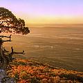Cedar Tree Atop Mt. Magazine - Arkansas - Autumn by Jason Politte