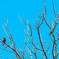 Cedar Wax Wings by Edward Peterson