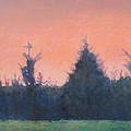 Cedars Along St. Marys In Hillsborough by Jude Lobe