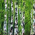 Celadon Spring by Cindy Johnston