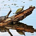 Happy Family Of Turtles by Cynthia Guinn
