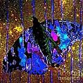 Celestial Butterfly by Saundra Myles