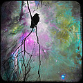Celestial Dream Of Crow by Gothicrow Images