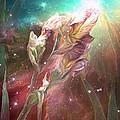 Celestial Iris by Carol Cavalaris