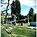 Cematary With Lemon Tree by Michele Monk
