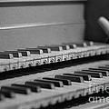 Cembalo Keyboards by Riccardo Mottola