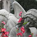 Cemetery Stone Angels And Flowers by Ian Mcadie