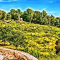 Cemetary Ridge Gettysburg Battleground by Bob and Nadine Johnston