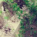Cemetery Bench II by Gary Richards