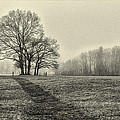 Cemetery Trees In The Fog E185 by Wendell Franks