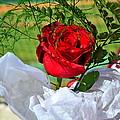 Centenary Rose by Darrell Clakley