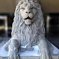 Center Street Lion by David Pantuso