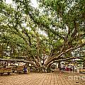 Central Court - Banyan Tree Park In Maui. by Jamie Pham