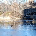 Central Park Bridge by Fran Wild