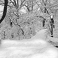 Central Park Dressed Up In White by Susan Candelario
