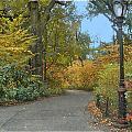Central Park In Autumn 7 by Muriel Levison Goodwin