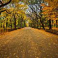 Central Park In Autumn by Dave Hahn