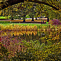 Central Park In Autumn - Nyc by Madeline Ellis
