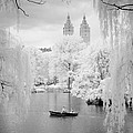 Central Park Lake-infrared Willows by Dave Beckerman