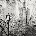 Central Park Lamppost In New York City by Lisa Russo