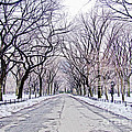 Central Park Mall In Winter by Nishanth Gopinathan