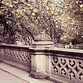 Central Park - New York by Marianna Mills