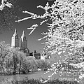 Central Park - Nyc by Luciano Mortula