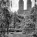 Central Park by Paul Watkins