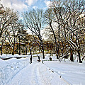 Central Park Snow Storm One Day Later2 by Madeline Ellis