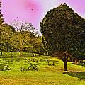 Central Park Sunday by Madeline Ellis