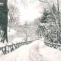 Central Park Winter Landscape by Vivienne Gucwa
