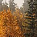 Central Park Yukon by Brian Boyle