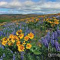 Central Washington Spring by Mike  Dawson