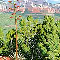 Century Plant - Sedona by Steve Simon