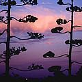 Century Sunset by Alan Thwaites