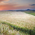 Cereal Fields by Guido Montanes Castillo