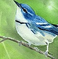 Cerulean Warbler by Lynn Quinn