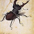 Cervus Lucanus by Pg Reproductions
