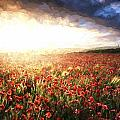 Cezanne Style Digital Painting Stunning Poppy Field Landscape Under Summer Sunset Sky by Matthew Gibson