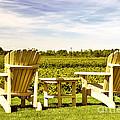 Chairs Overlooking Vineyard by Elena Elisseeva